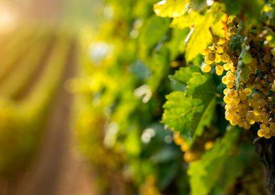 Verde wine tour